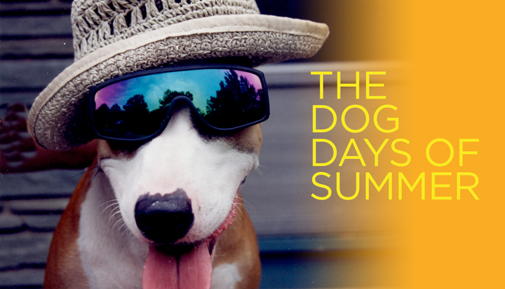 Welcome to the Dog Days of Summer